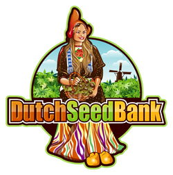 dutch seeds